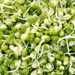 sprouts-1